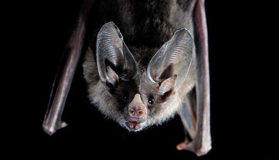 Sonhar com morcego: o que isso quer dizer?