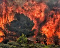 Giấc mơ thấy cháy rừng đánh con gì? Giải mã giấc mơ