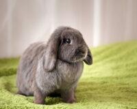 Mơ thấy con thỏ đánh số mấy? Ý nghĩa nằm mơ thấy thỏ là điềm lành hay dữ?